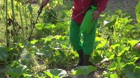Ψεκάζοντας λαχανικά κολοκυθιών στο αγρόκτημα Επεξεργασία εργοστασίων χημικής βιομηχανίας closeup 4K απόθεμα βίντεο