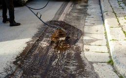 Ψεκάζοντας γαλάκτωμα πίσσας οδικών εργαζομένων στοκ φωτογραφία