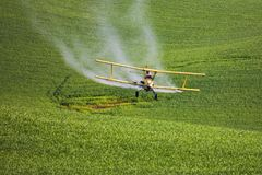 Ψεκάζοντας εντομοκτόνο στο σίτο Στοκ Φωτογραφία