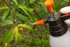 Ψεκάζοντας μυκητοκτόνο οπωρωφόρων δέντρων φύλλων στοκ εικόνες