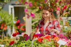 Ψεκάζοντας νερό γυναικών στα λουλούδια Στοκ Εικόνα