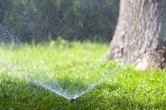 Ψεκάζοντας νερό ψεκαστήρων νερού χορτοταπήτων πέρα από τη χλόη στον κήπο μια καυτή θερινή ημέρα Αυτόματοι χορτοτάπητες ποτίσματος Στοκ Εικόνες