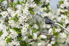 Ψεκάζοντας λουλούδια κερασιών στοκ φωτογραφία με δικαίωμα ελεύθερης χρήσης