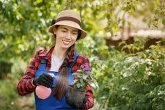 Ψεκάζοντας φυτοφάρμακο ή νερό κηπουρών στα λουλούδια στο δοχείο στοκ εικόνα