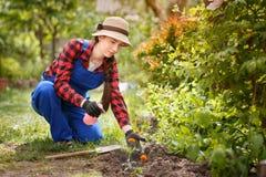 Ψεκάζοντας φυτοφάρμακο ή νερό κηπουρών στα λουλούδια στοκ φωτογραφίες με δικαίωμα ελεύθερης χρήσης