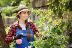 Ψεκάζοντας φυτοφάρμακο ή νερό κηπουρών στα λουλούδια στοκ φωτογραφίες
