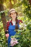 Ψεκάζοντας φυτοφάρμακο κηπουρών στα λουλούδια στοκ εικόνα με δικαίωμα ελεύθερης χρήσης