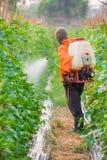 Ψεκάζοντας φυτοφάρμακο στοκ φωτογραφία με δικαίωμα ελεύθερης χρήσης