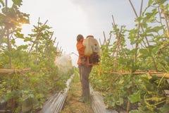 Ψεκάζοντας φυτοφάρμακο στοκ φωτογραφίες