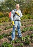 Ψεκάζοντας φυτό φραουλών ατόμων Στοκ εικόνα με δικαίωμα ελεύθερης χρήσης