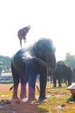 ψεκάζοντας ύδωρ σκιαγραφιών ελεφάντων λουτρών Στοκ φωτογραφία με δικαίωμα ελεύθερης χρήσης