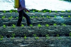 Ψεκασμός εντομοκτόνων Στοκ Εικόνα