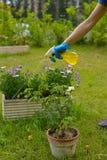 Ψεκασμός φυτοφαρμάκων Στοκ Εικόνα