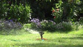 Ψεκαστήρας κήπων την ηλιόλουστη ημέρα που ποτίζει τον πράσινο χορτοτάπητα στον κήπο 4K απόθεμα βίντεο