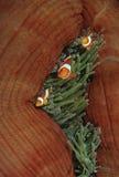 Ψεύτικος κλόουν Ειρηνικών Ωκεανών Ampat Ινδονησία Raja anemonefish (ocellaris amphiprion) στο anemone θάλασσας (Heteractis Magnifi Στοκ φωτογραφίες με δικαίωμα ελεύθερης χρήσης