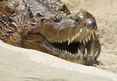 Ψεύτικος gharial Στοκ Φωτογραφίες