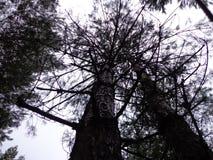 Ψηλά δέντρα, ουρανός στοκ φωτογραφία