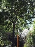 Ψηλά δέντρα σε μια ήρεμη πόλη στοκ εικόνες