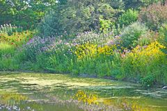Ψηλά χλόες και λουλούδια στην άκρη της λίμνης στοκ φωτογραφίες