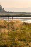 ψηλές άγριες χλόες που αυξάνονται στους υγρότοπους τον Αύγουστο στοκ φωτογραφία με δικαίωμα ελεύθερης χρήσης