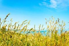 Ψηλές χλόες μπροστά από μια άποψη της ακτής του Γιορκσάιρ στοκ εικόνες