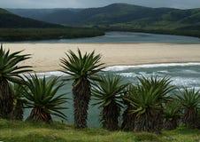 Ψηλή ανάπτυξη αλόης στο λόφο που αγνοεί το ανατολικό ακρωτήριο του Transkei λιμνοθαλασσών στοκ εικόνες