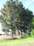 ψηλή ξυλεία Στοκ Εικόνα