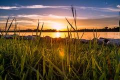 Ψηλή χλόη από τη λίμνη στοκ φωτογραφία με δικαίωμα ελεύθερης χρήσης