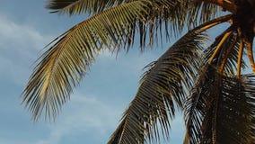 Ψηλοί φοίνικες ενάντια στον ουρανό Τροπικό τοπίο φιλμ μικρού μήκους