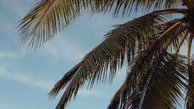 Ψηλοί φοίνικες ενάντια στον ουρανό Τροπικό τοπίο απόθεμα βίντεο