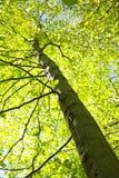 ψηλό δέντρο Στοκ Φωτογραφία