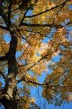 ψηλό δέντρο Στοκ φωτογραφία με δικαίωμα ελεύθερης χρήσης
