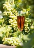 Ψηλό ποτήρι του κρασιού και μια δέσμη των σταφυλιών στοκ εικόνες με δικαίωμα ελεύθερης χρήσης