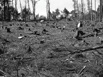 Ψηλό ρολόι δέντρων πέρα από την ερήμωση που αφήνεται από τους υλοτόμους μετά από να τεμαχίσει κάτω από τα δέντρα στοκ φωτογραφίες