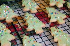 Ψημένα μπισκότα ζάχαρης χριστουγεννιάτικων δέντρων Στοκ Φωτογραφίες