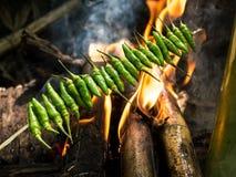 Ψημένα στη σχάρα πράσινα τσίλι στην πυρκαγιά στο δάσος Στοκ φωτογραφία με δικαίωμα ελεύθερης χρήσης