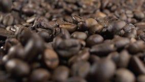 Ψημένα φασόλια καφέ που πέφτουν κάτω κίνηση αργή Πυροβολισμός κινηματογραφήσεων σε πρώτο πλάνο απόθεμα βίντεο