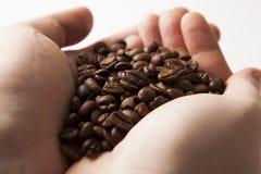 Ψημένα φασόλια καφέ στους φοίνικες των ατόμων Στοκ Εικόνες