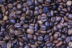 Ψημένα arabica φασόλια καφέ Στοκ Εικόνα
