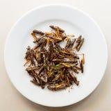 Ψημένα grasshoppers σε ένα άσπρο πιάτο Στοκ φωτογραφίες με δικαίωμα ελεύθερης χρήσης