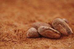 Ψημένη μακροεντολή φασολιών σοκολάτας κακάου στη σκόνη κακάου Στοκ φωτογραφία με δικαίωμα ελεύθερης χρήσης