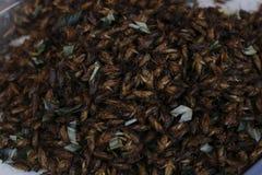 Ψημένο στη σχάρα έντομο Στοκ εικόνα με δικαίωμα ελεύθερης χρήσης