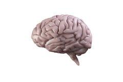 Ψηφιακά παραγμένος εγκέφαλος απεικόνιση αποθεμάτων