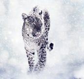Ψηφιακή ζωγραφική της λεοπάρδαλης διανυσματική απεικόνιση