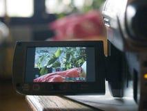ψηφιακή παρουσίαση LCD φωτογραφικών μηχανών Στοκ Φωτογραφίες