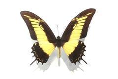 ψηφιακό fractal φαντασίας πεταλούδων παρήγαγε γραφικό Στοκ εικόνα με δικαίωμα ελεύθερης χρήσης
