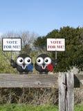 Ψηφοφορία για με πολιτικοί στοκ εικόνα με δικαίωμα ελεύθερης χρήσης