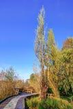 Ψηλά δέντρα από μια ξύλινη πορεία στο πάρκο λιμνών ελαφιών Στοκ εικόνα με δικαίωμα ελεύθερης χρήσης