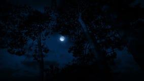 Ψηλά δέντρα στον αέρα τη νύχτα απόθεμα βίντεο