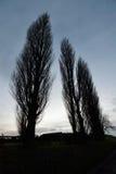 ψηλά δέντρα Στοκ φωτογραφίες με δικαίωμα ελεύθερης χρήσης